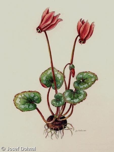 Fotograficky Klic K Urcovani Cevnatych Rostlin Botanicka Fotogalerie