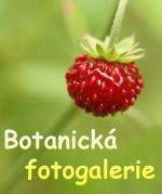 botanická fotogalerie - odkaz